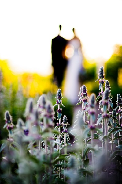 Lavender field silhouette of a Bride and Groom